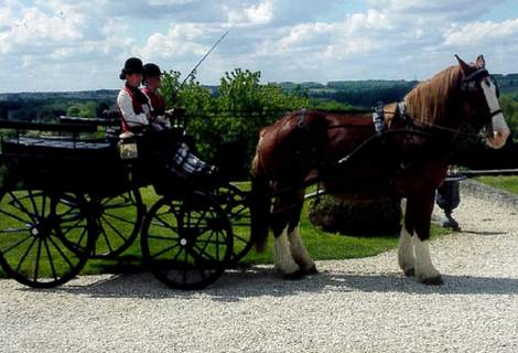 Horse-drawn carriage ride and wine tasting